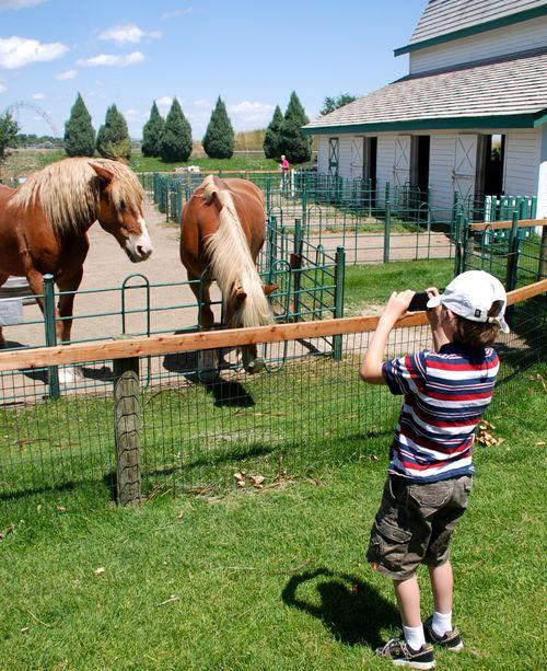Horses at ZooMontana looking at Zac