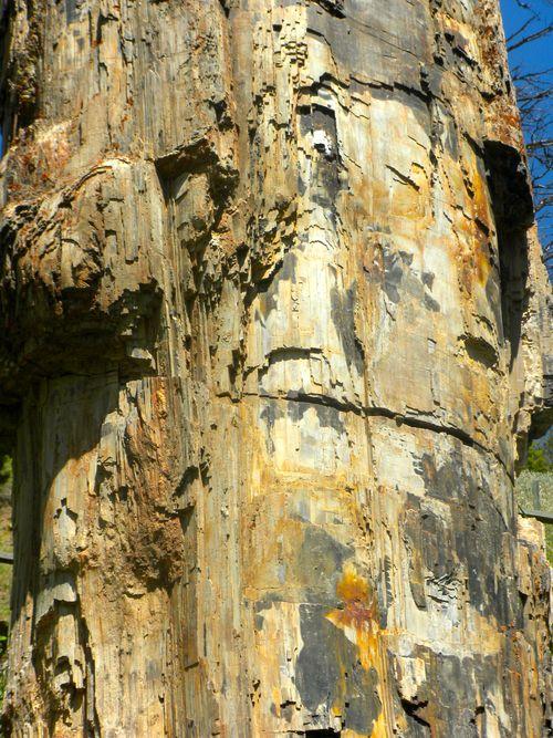 Petrified Tree Yellowstone Park